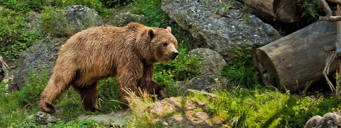 Ausflugsziele vom Hotel Das Urbisgut - Zoo Salzburg
